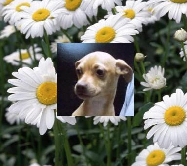 Daisy in daisies