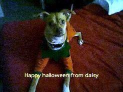 daisy halloween