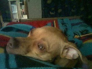 Daisy snuggling