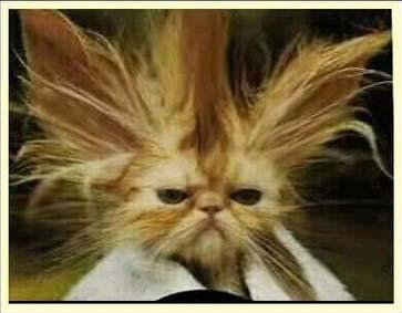 stressed_cat